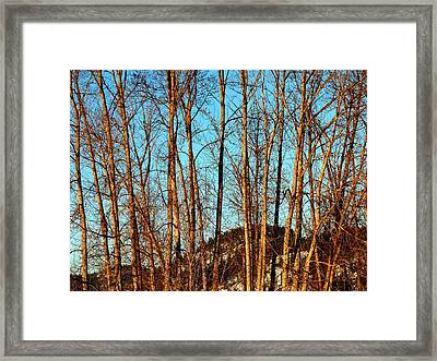 Framed Print featuring the photograph Glow Of The Setting Sun by Will Borden