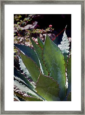 Framed Print featuring the photograph Glowing Agave by Phyllis Denton