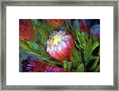 Glowing Bromeliad Bud Framed Print by Casey Heisler