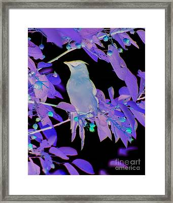 Framed Print featuring the photograph Glowing Cedar Waxwing by Smilin Eyes  Treasures