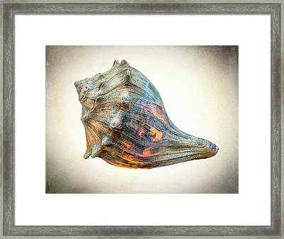 Framed Print featuring the photograph Glowing Conch Shell by Gary Slawsky