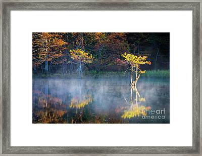 Glowing Cypresses Framed Print by Inge Johnsson