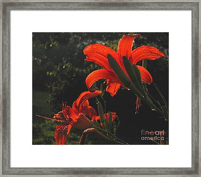 Framed Print featuring the photograph Glowing Day Lilies by Donna Brown