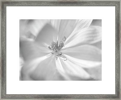 Glowing Flower, Black And White Framed Print