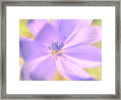 Glowing Flower, Lavender Framed Print by Nat Air Craft
