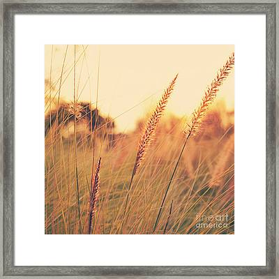 Glowing Fountain Grass - Hipster Photo Square Framed Print