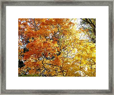 Glowing In The Sunlight Framed Print