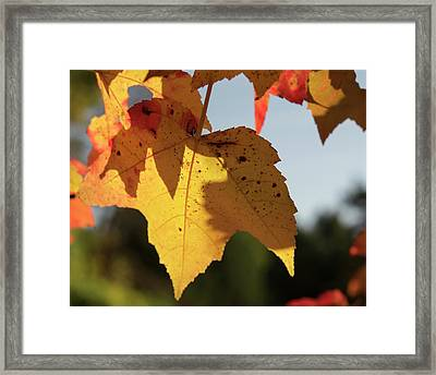 Glowing Leaves Framed Print