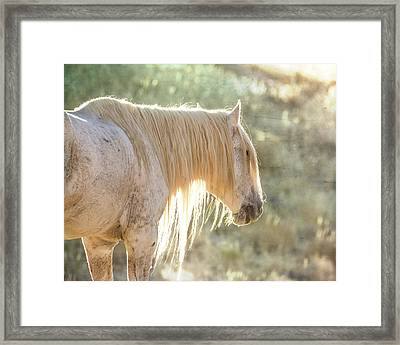 Glowing Framed Print by Mary Hone