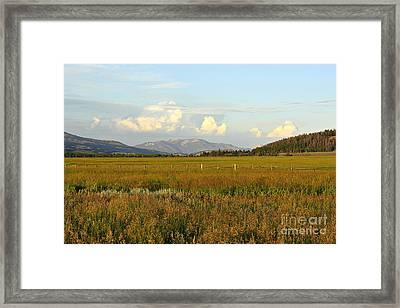 Glowing Meadow Framed Print