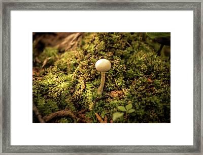 Glowing Mushroom Framed Print