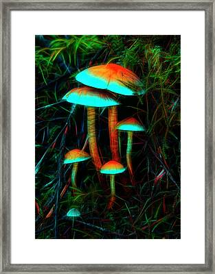 Framed Print featuring the photograph Glowing Mushrooms by Yulia Kazansky