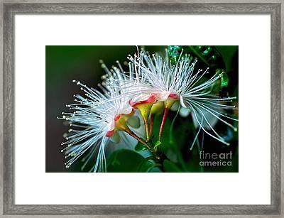 Glowing Needles Framed Print by Kaye Menner