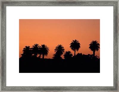 Glowing Palms Framed Print by Brad Scott