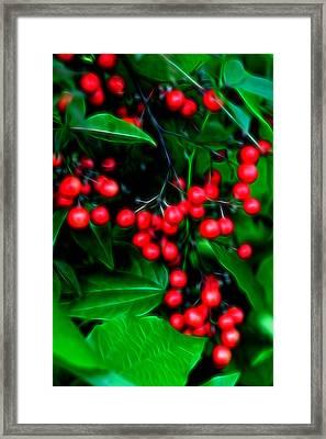 Glowing Pyracantha Berries Framed Print by Linda Phelps