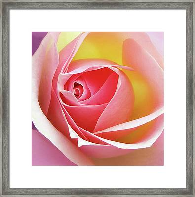 Glowing Rose 6 Framed Print