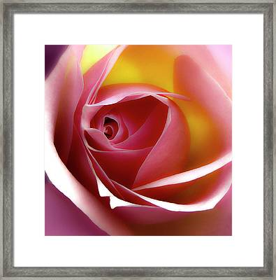 Glowing Rose Hdr Framed Print