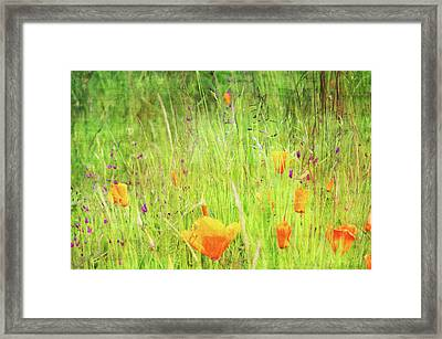 Glowing Summer Framed Print by Terrie Taylor