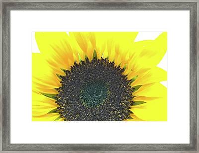 Glowing Sunflower Framed Print