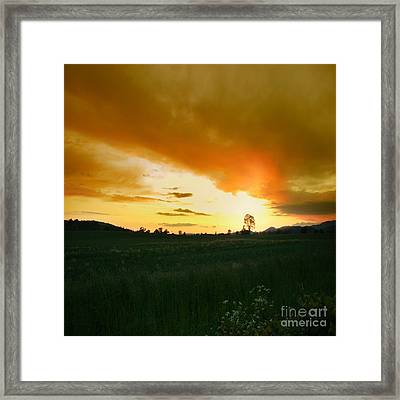 Glowing Tree Framed Print by Angel  Tarantella