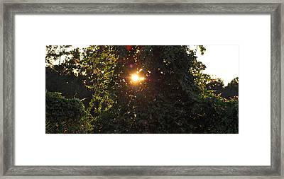 Framed Print featuring the photograph Glowing Tree by Michael Albright