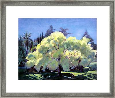 Glowing Tree Framed Print by Richard  Willson