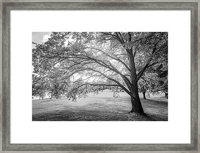 Glowing Tree Framed Print by Teemu Tretjakov