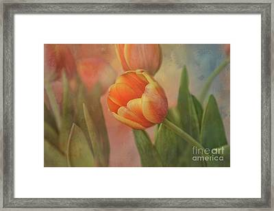 Glowing Tulip Framed Print by Joan Bertucci