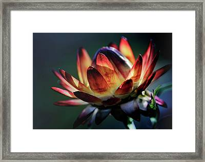 Glowing Wild Flower Nr. 2 Framed Print by Mah FineArt