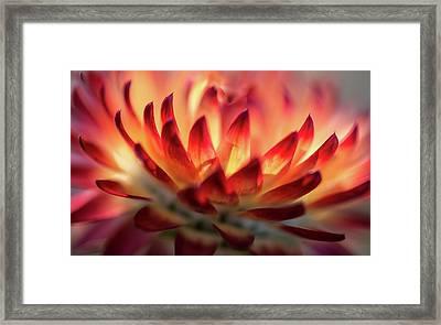 Glowing Wildflower Framed Print by Mah FineArt