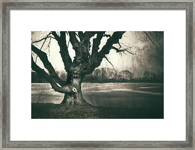 Gnarled Old Tree Framed Print by Scott Norris