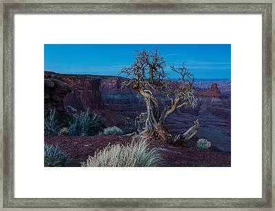 Gnarled Framed Print by Paul Noble