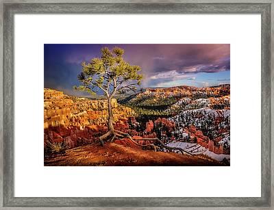 Gnarled Tree At Bryce Canyon Framed Print