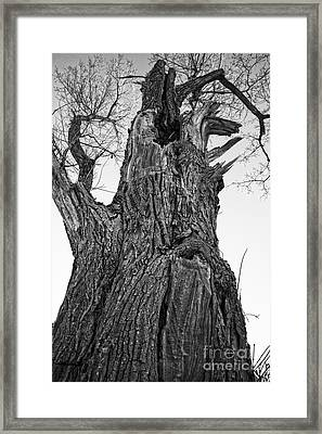 Gnarly Old Tree Framed Print