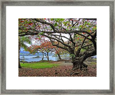 Gnarly Trees Of South Hilo Bay - Hawaii Framed Print
