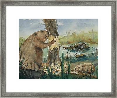 Gnawing Beaver Framed Print by Barbara McGeachen