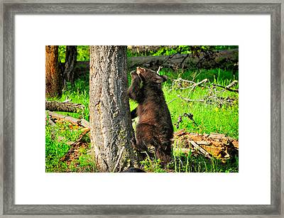 Go Climb A Tree Framed Print