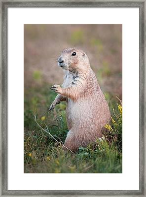 Framed Print featuring the photograph Go Dog Go by Thomas Gaitley