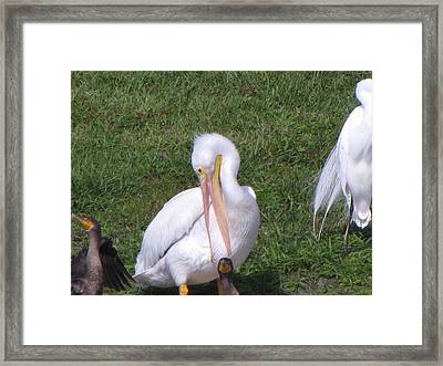 Framed Print featuring the photograph Go Fish Somewhere Else by Martha Ayotte