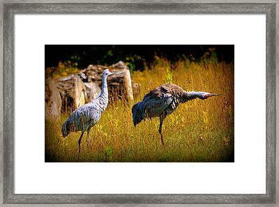 Go This Way Framed Print