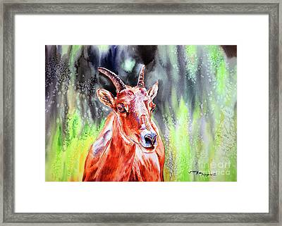 Goat From The Mountain Framed Print by Tracy Rose Moyers