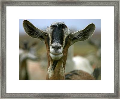 Goat Framed Print by James Peterson