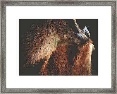 Framed Print featuring the photograph Goat Love by Viviana  Nadowski