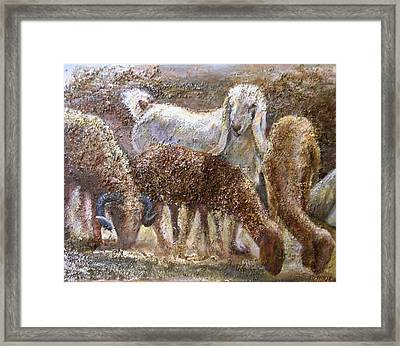 Goat With Sheep Framed Print by Sylva Zalmanson