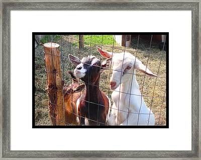Framed Print featuring the photograph Goats by Felipe Adan Lerma