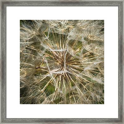 Goats Head Seeds Framed Print by Paul Freidlund