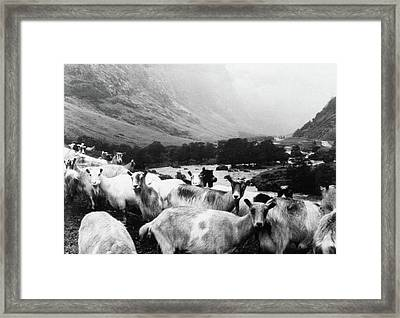 Framed Print featuring the mixed media Goats In Norway- By Linda Woods by Linda Woods