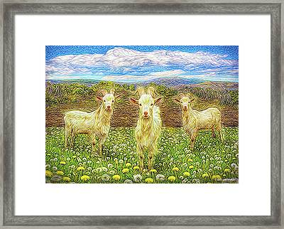 Goats In The Dandelions Framed Print