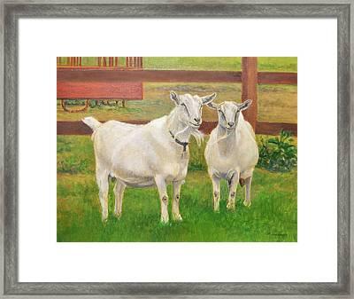 Goats On The Farm Framed Print