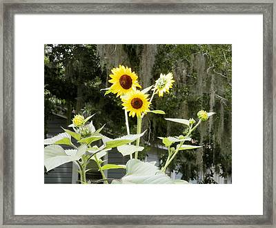 God Created Sunflower Trees And Honey Bees Framed Print